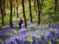 Spring in Snowdonia