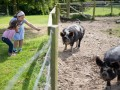 Kids and pigs!