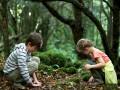 Explore the woodland walk