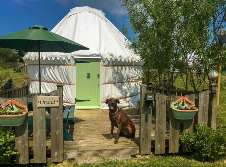 Orchid Yurt In Perranporth