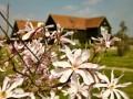 Little Tey Barn