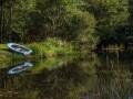 Kingfisher In Bodmin Moor