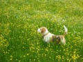 Dogs love the meadow