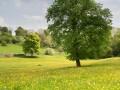 Dove Cottage At Churchdale Farm