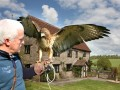 Birds of Prey Experiences