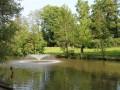 Moorhens At Lakeside